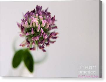 Susan Smith Canvas Print - Pink Perspective by Susan Smith
