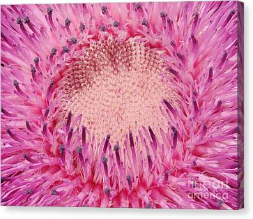 Pink Pop Canvas Print by Mark Holbrook