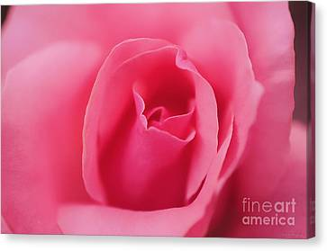 Pink Precious Powerful Rose Canvas Print by Clayton Bruster