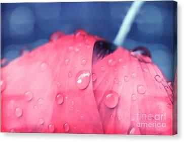 Pink Puppie Canvas Print by Soultana Koleska