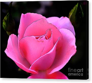 Canvas Print featuring the photograph Pink Rose Day by Clayton Bruster