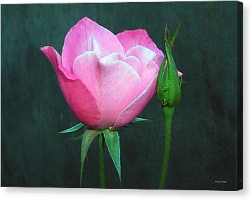 Canvas Print featuring the photograph Pink Rose by George Bostian
