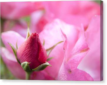 Canvas Print featuring the photograph Pink Rose by Jeannette Hunt