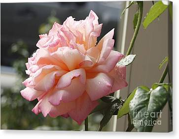 Canvas Print featuring the photograph Pink Rose  by Yumi Johnson