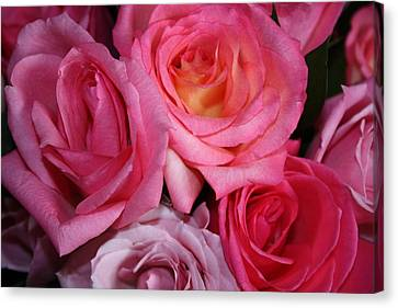 Pink Roses Canvas Print by Robin Regan