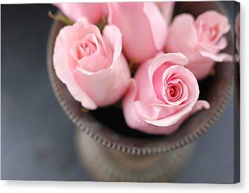 Pink Roses Canvas Print by Shawna Lemay
