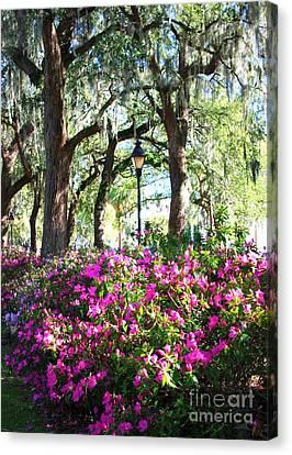 Pink Savannah Azaleas Canvas Print by Carol Groenen