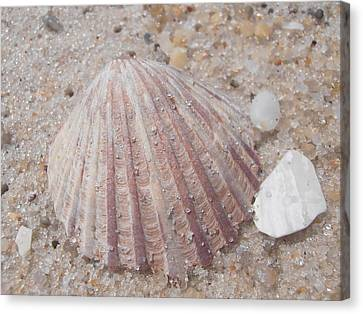 Pink Scallop Shell Canvas Print by Kimberly Perry