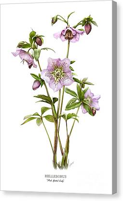 Pink Spotted Lady Hellebores Canvas Print by Artellus Artworks