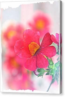 Canvas Print - Pink by Susie DeZarn