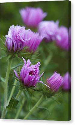 Canvas Print featuring the photograph Pink Swirls by Carrie Cranwill