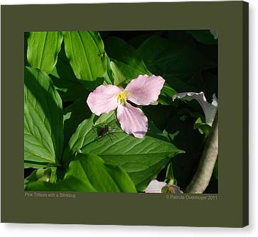 Pink Trillium Witha Stinkbug Canvas Print by Patricia Overmoyer