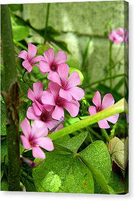 Canvas Print featuring the photograph Pink Wild Flowers by Ester  Rogers