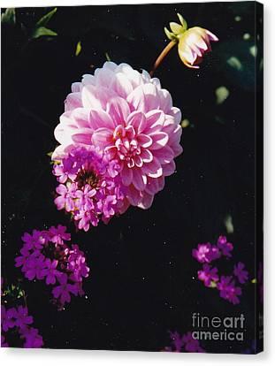 Pinkish Purplish Canvas Print