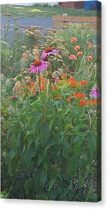 Pinkviolet Dasies With Garden Flowers Canvas Print by Thelma Harcum