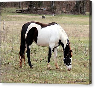 Pinto Canvas Print by Lorraine Louwerse