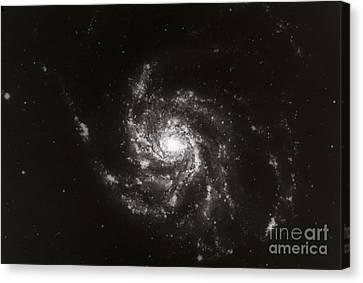 Pinwheel Galaxy, M101 Canvas Print by Science Source
