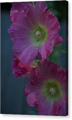 Canvas Print featuring the photograph Piquant by Joseph Yarbrough