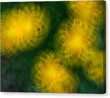 Pirouetting Dandelions Canvas Print by Neil Shapiro