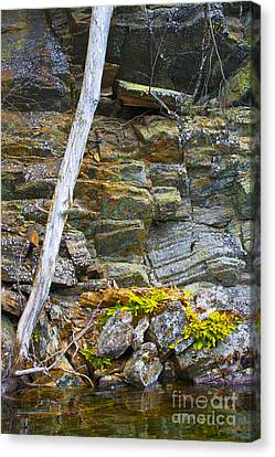 Plant Life On Rocky Canadian Lake Shore Canvas Print by Gordon Wood
