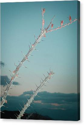 Plant Canvas Print by Naxart Studio