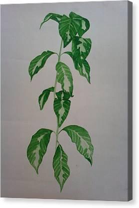 Plant Canvas Print by Shilpa V N