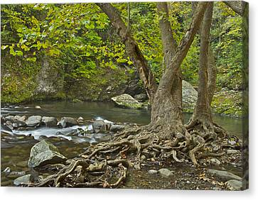 Planted By The Rivers Of Water Canvas Print by Michael Peychich