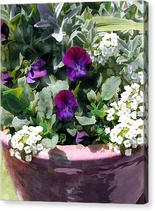 Planter Of Purple Pansies And White Alyssum Canvas Print by Elaine Plesser