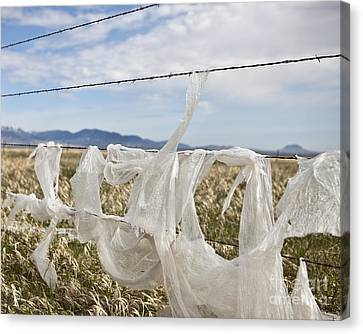 Plastic Garbage Bag On A Wire Fence Canvas Print by Paul Edmondson