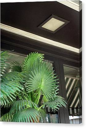 Canvas Print featuring the photograph Plastic Palms And Striped Awnings by Louis Nugent