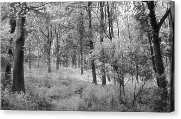 Platinum Forest Canvas Print by Sarah Couzens