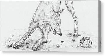 Play II Canvas Print by Teresa Vecere