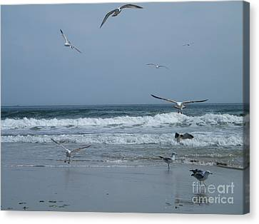 Playful Gulls Canvas Print by Laurence Oliver