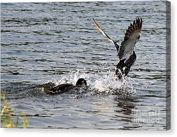 Canvas Print featuring the photograph Playing Chase by Kathy  White