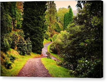 Pleasant Path. Benmore Botanical Garden. Scotland Canvas Print by Jenny Rainbow