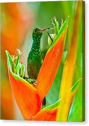 Plenty Of Nectar Canvas Print by Susi Stroud