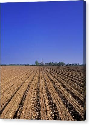 Ploughed Potato Field, Ducketts Grove Canvas Print