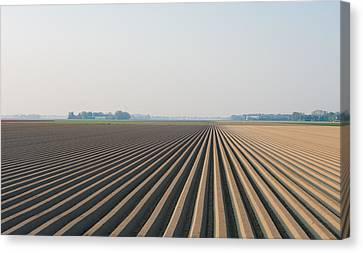 Plowed Field Canvas Print by Hans Engbers