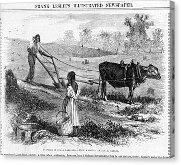 Plowing In South Carolina.  African Canvas Print by Everett