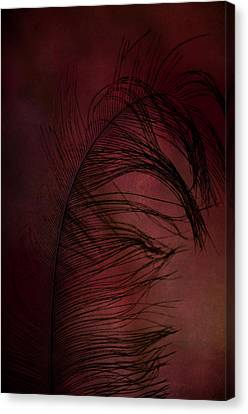 Canvas Print featuring the photograph Plum Tickled by Robin Dickinson
