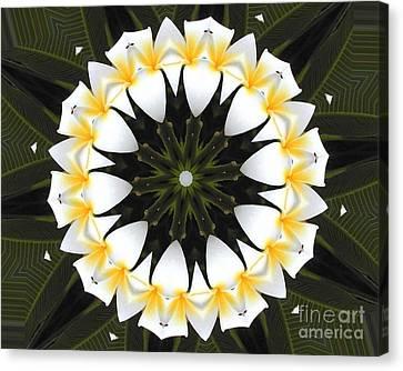 Plumeria 1 Canvas Print by Mark Gilman