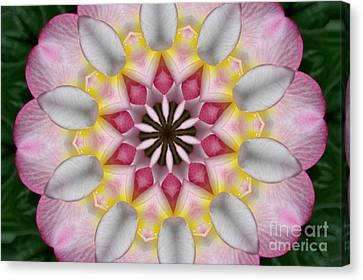 Plumeria 3 Canvas Print by Mark Gilman