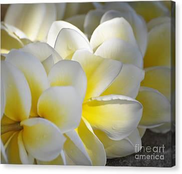 Plumeria Flower Lei Canvas Print