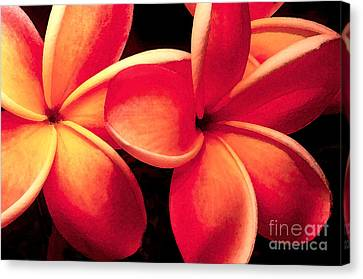 Plumeria Flowers Canvas Print by Paul Topp