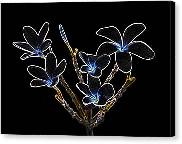 Plumeria Outlines B7072 Canvas Print by Michael Peychich