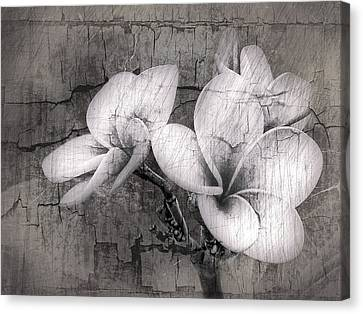 Plumiera In Black And White Canvas Print by James Steele