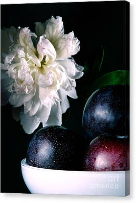 Plums And Peony Canvas Print by HD Connelly