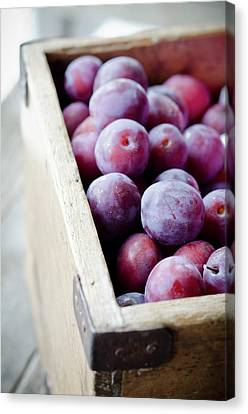 Plums Canvas Print by Marju Randmer