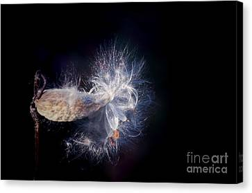 Canvas Print featuring the photograph Pod In The Wind by Deniece Platt