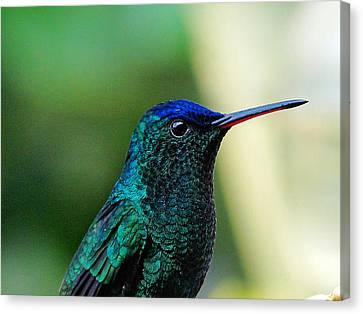 Canvas Print featuring the photograph Poised by Blair Wainman